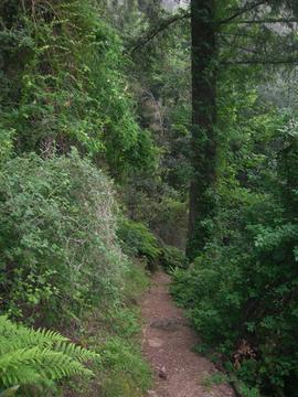 &ucname(Mount Wilson Trail )