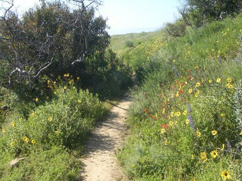&ucname(Long Canyon Trail )